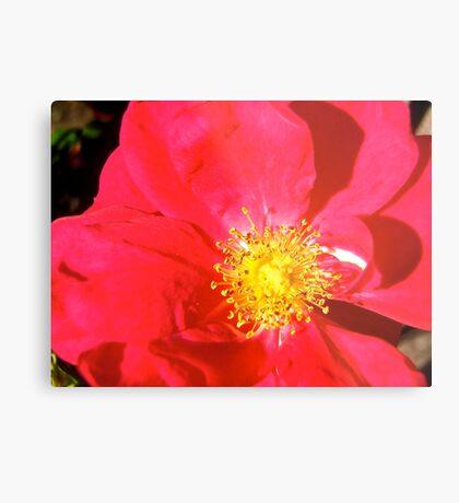 Governor General's Roses14 Metal Print
