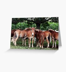 Outstanding In the Field Greeting Card