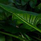 Green Foliage by Barbara Burkhardt
