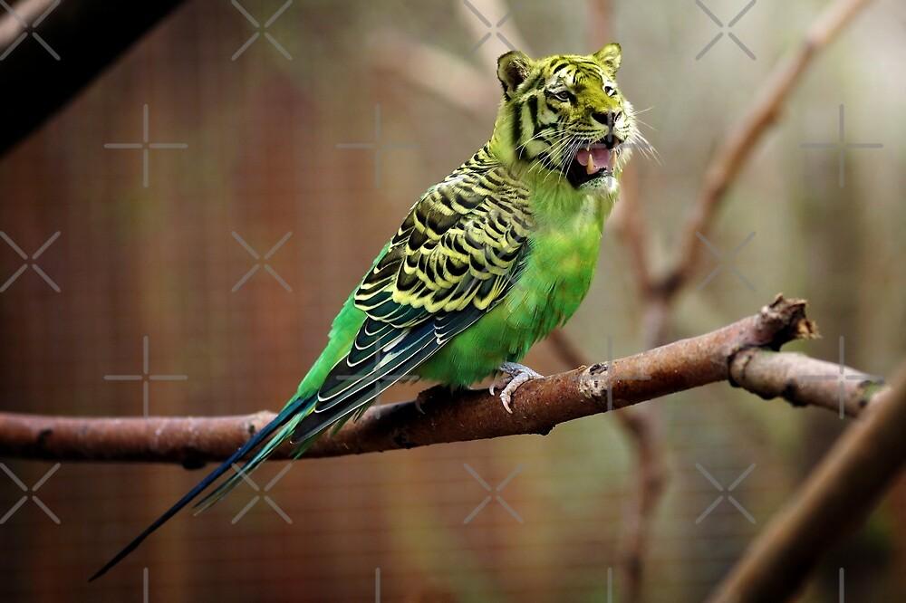 Tiger Birds by Zzart