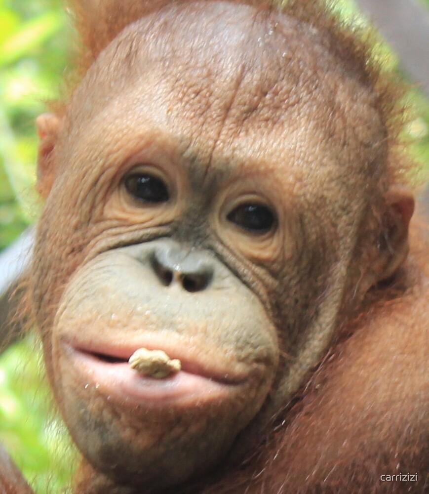 Orangutang close up by carrizizi