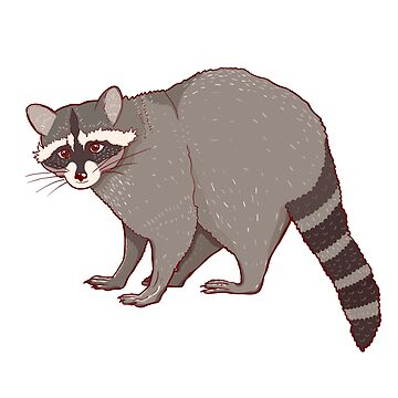Gray cute raccoon by Elsbet