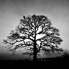 Tree in silhouette by SwampDogPhoto