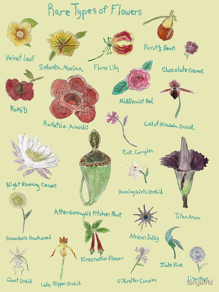 Rare Types of Flowers by tanyafrid