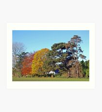 autumn colours Art Print