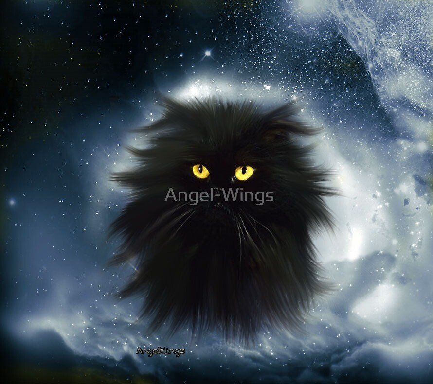 Cat by Angel-Wings