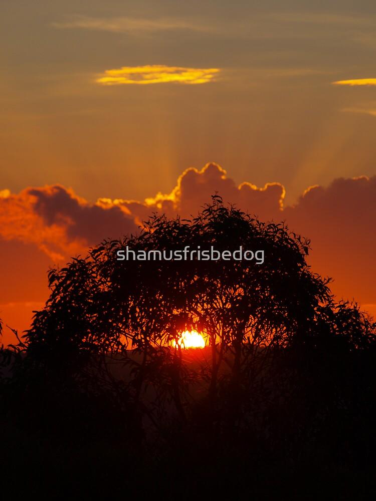 fire by shamusfrisbedog