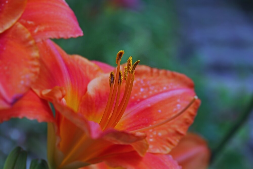 Simple Stamens by Michiale