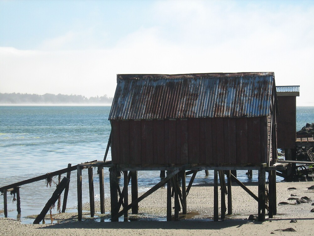 Old boat shed near Dunedin, NZ  2008 by Patricia  Knowles