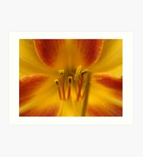Daylily Orange and Red Art Print