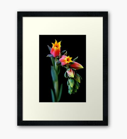 The Proud Framed Print