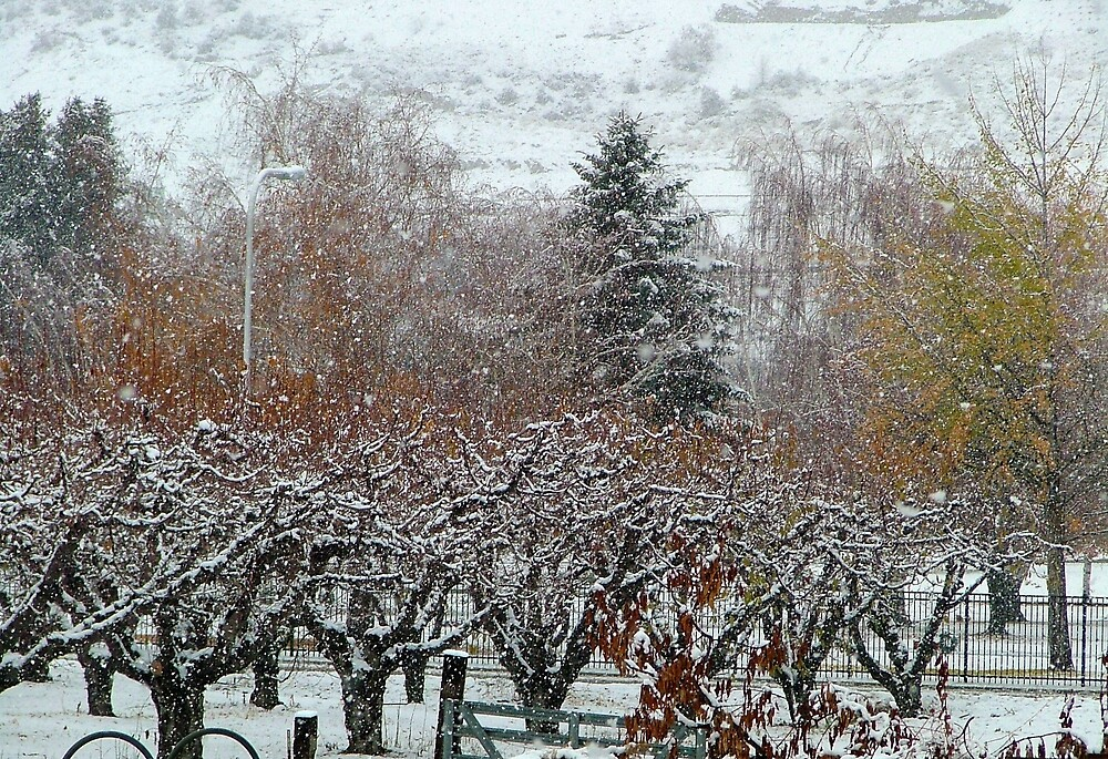 Snow comes to the cherry orchard by Cricket Jones