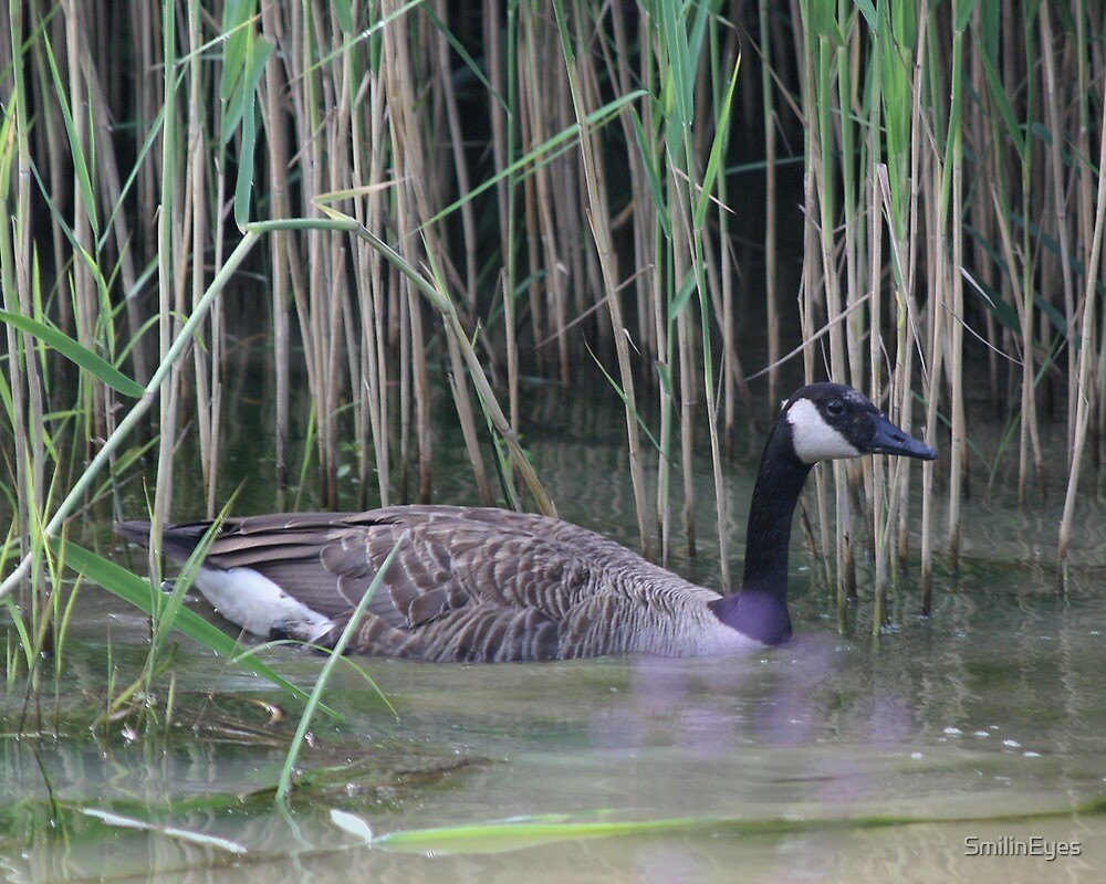Canada Goose by SmilinEyes