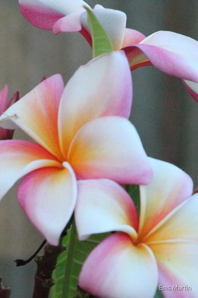 Flower by Ems Martin