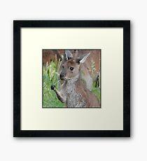 Cute Kangaroo Joey Framed Print