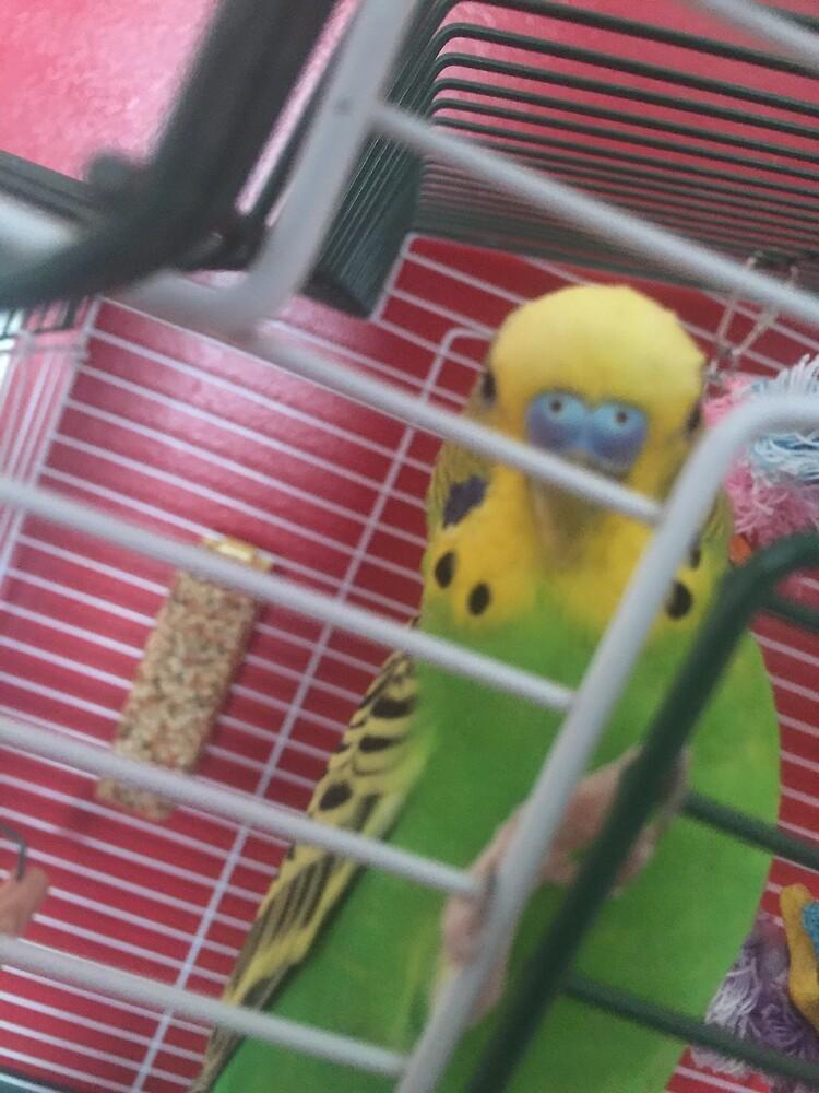 Margo The Parakeet 5 by margoparakeet