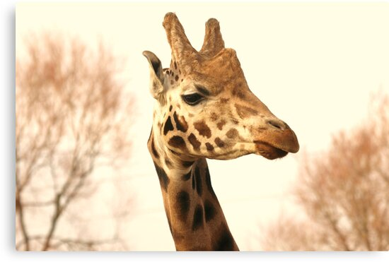 Hi Down There! by Franco De Luca Calce