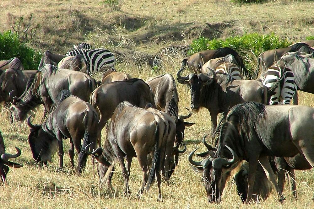 Zebra and friends by jardin