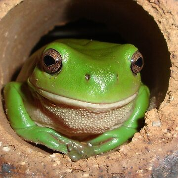 Green Tree-Frog in Hole by AStevensAdmin