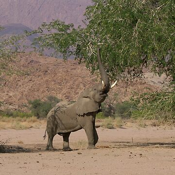 Desert Elephant - Namibia by AStevensAdmin