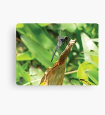 Beautiful Dragonfly Canvas Print