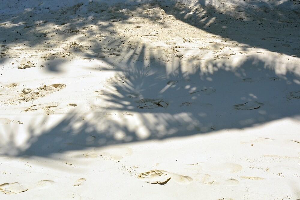 Shadow of palm tree in the sand by oanaunciuleanu