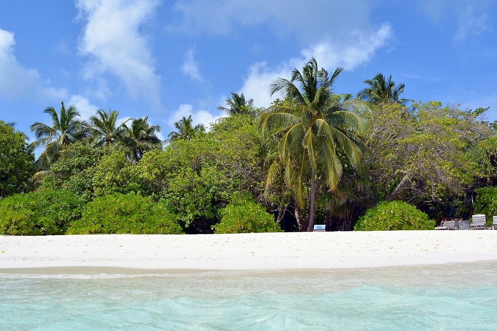 Palm trees and exotic vegetation on the beach of an island in Maldives by oanaunciuleanu