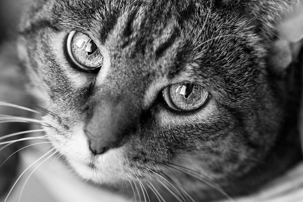 Cat motive by Pokofoto