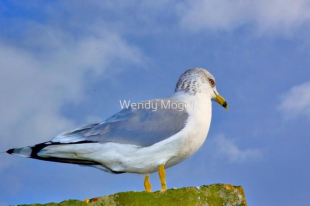 Seagull  by Wendy Mogul