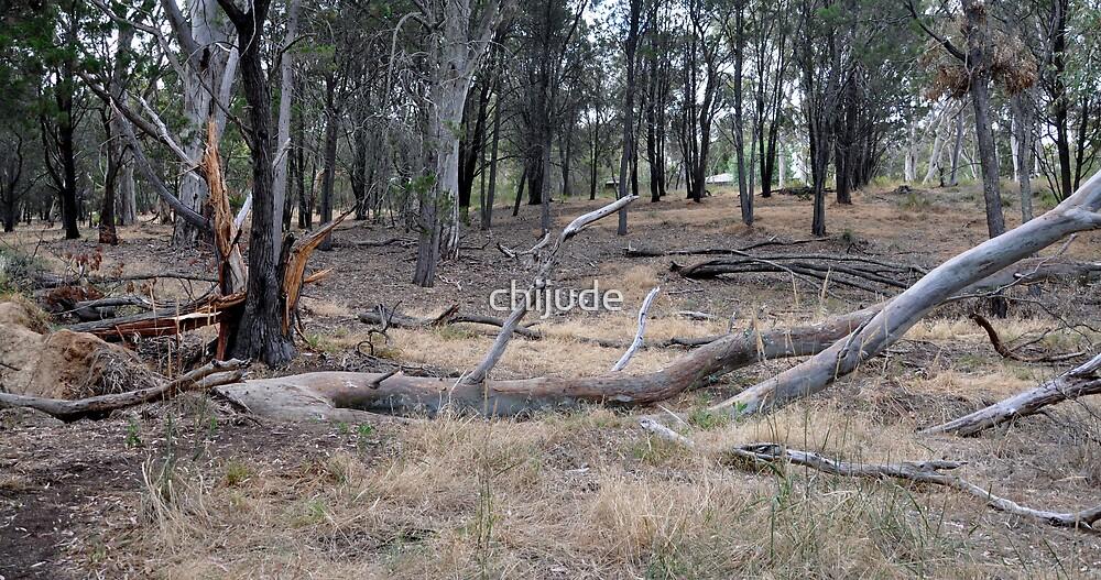 Summer Struggle - Ferguson Conservation Park - South Australia by chijude