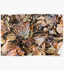 Autumn Leaves a Bunch Poster