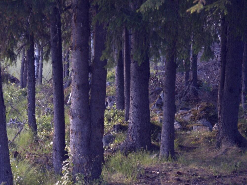 Trees by Mayza