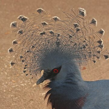 Victoria Crowned Pigeon by Hawker