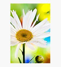Colour Wheel Photographic Print