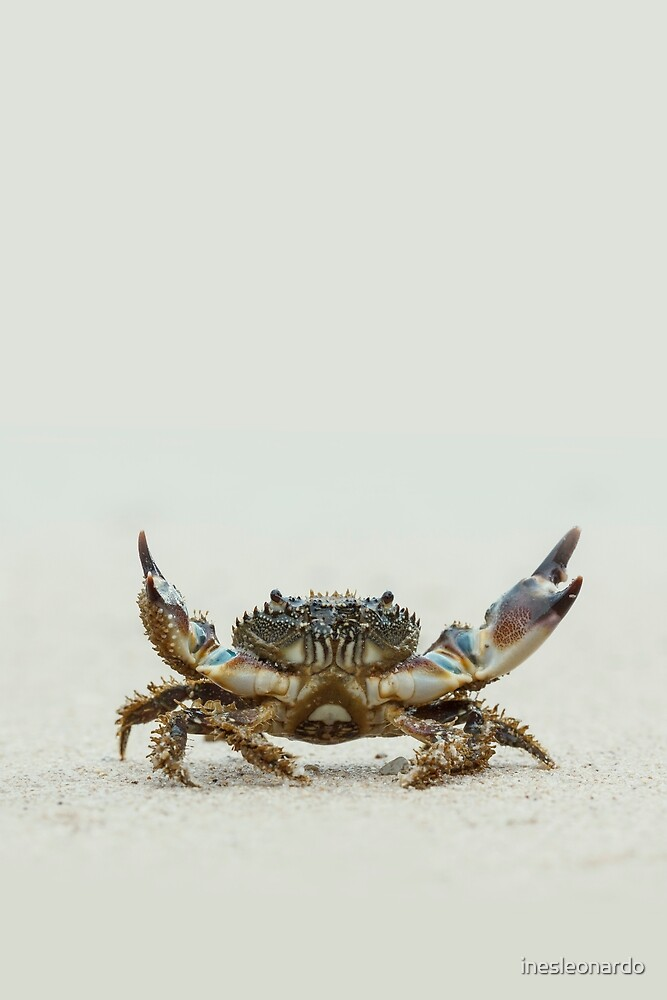 Open arms crab by inesleonardo