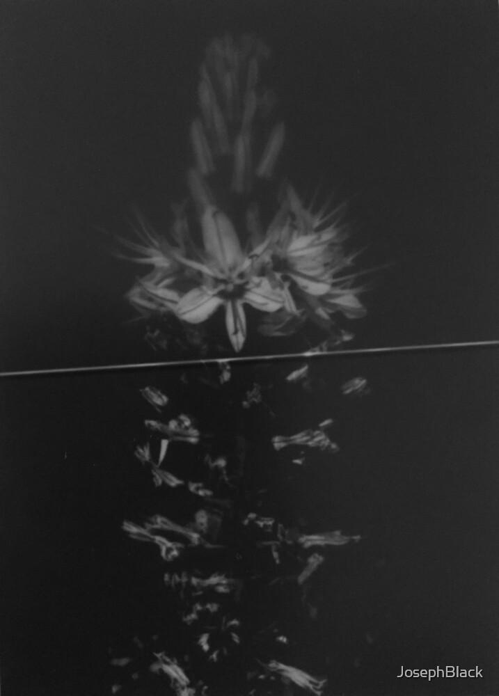 Asphodel Flowers by Joseph Black by JosephBlack