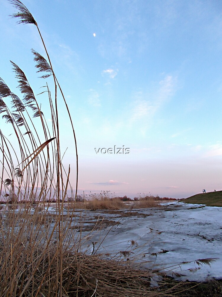 Dreaming winter reed by voelzis