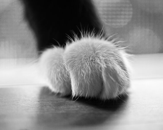 Tuxedo cat paw black and white by WayneOxfordPh
