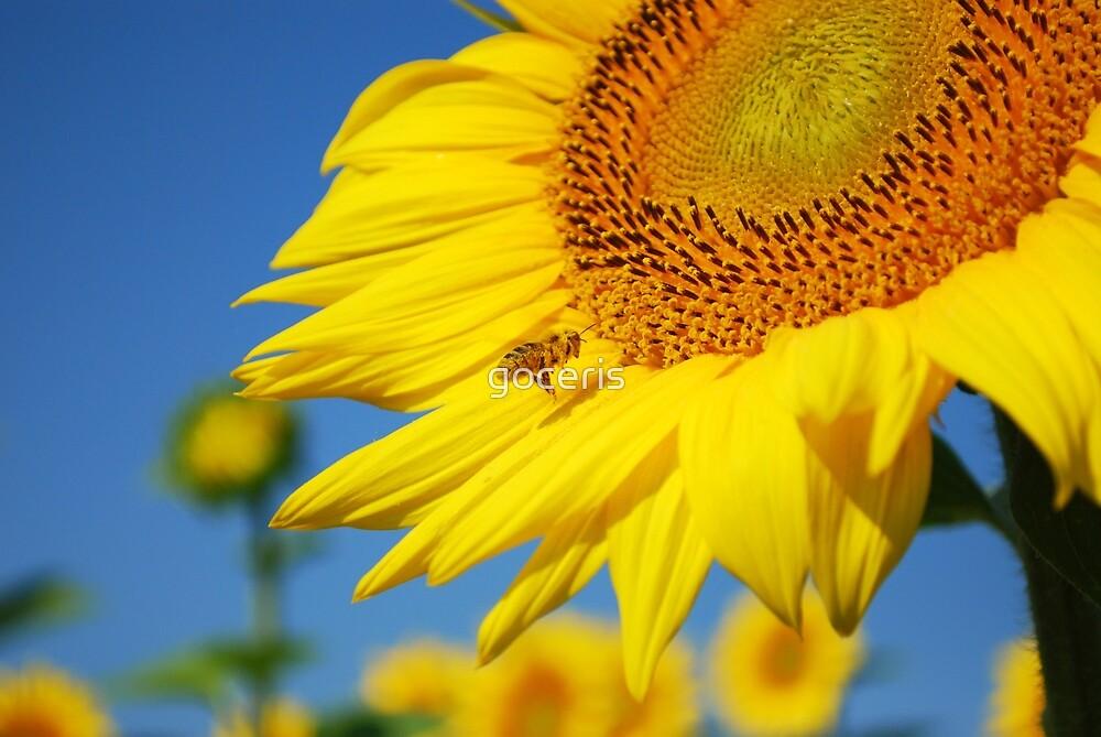 Summer scene with bee flying around sunflower by goceris