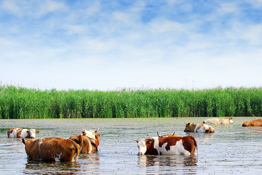 Farm scene with cows on watering place by goceris