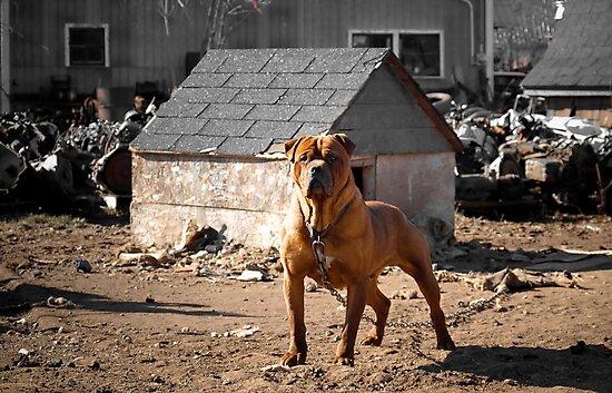 Junk Yard Dog by Zach  Schible