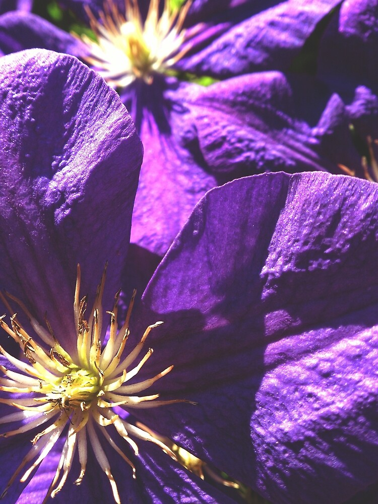 Deep purple by OriginalM4U