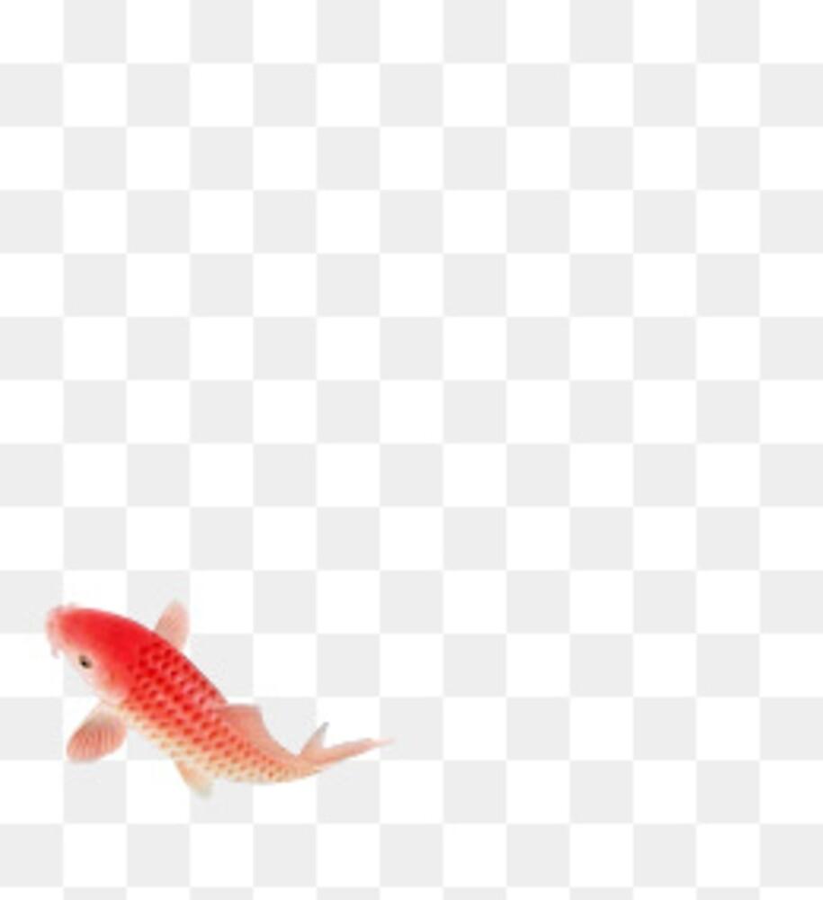 its a fish mayne by houndbabey