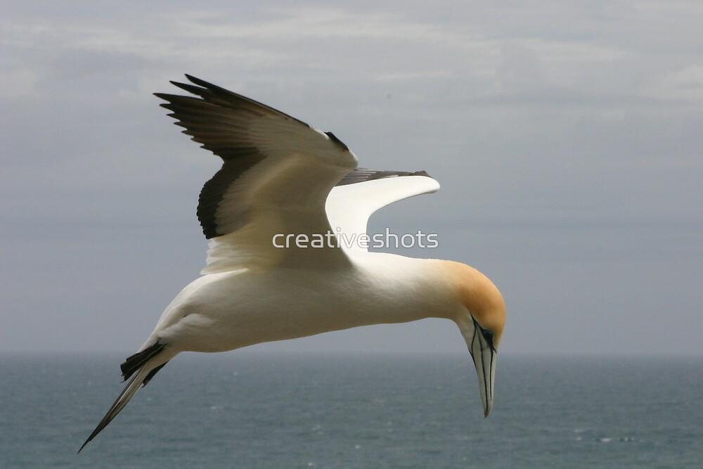 Gannet by creativeshots