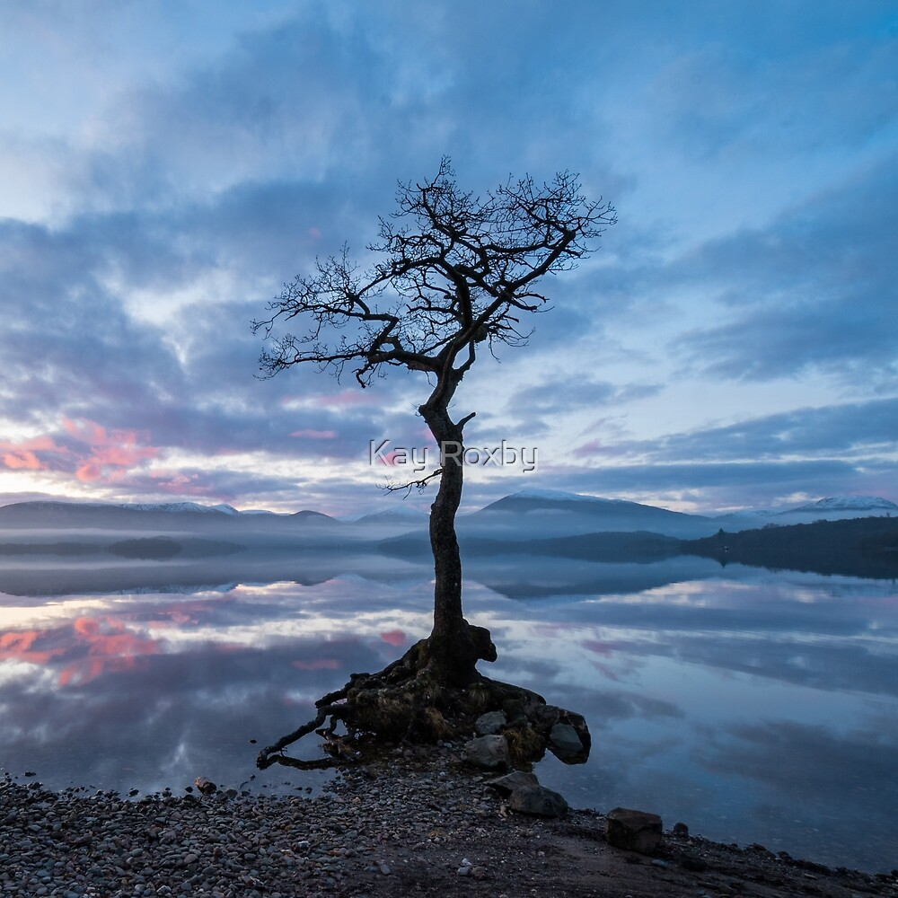Loch Lomond lone tree by Kay Roxby