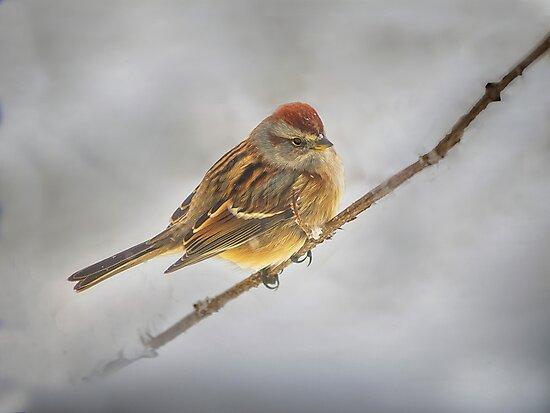 Winter Birds - Sparrow by Kathy Weaver