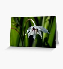 Peacock Orchid Greeting Card