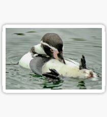 Preening Penguin Sticker