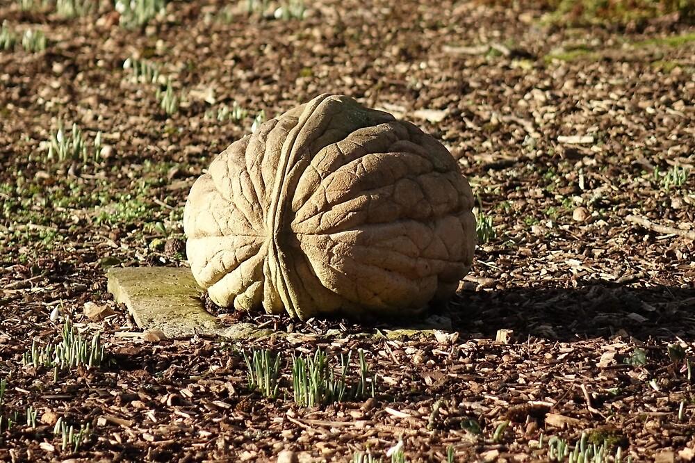Walnut by frogs123