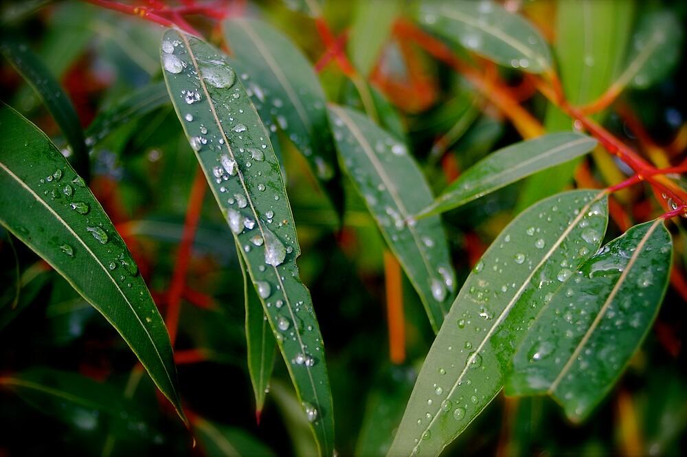 Droplets by Missy777